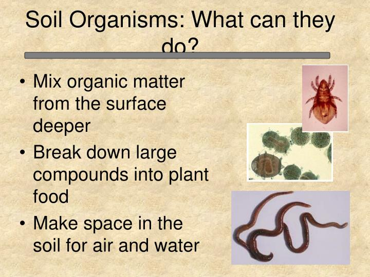 Soil Organisms: What can they do?