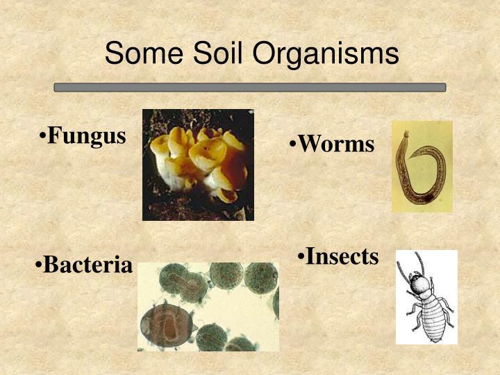 Some Soil Organisms