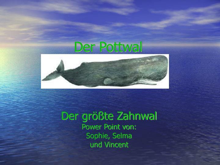 Der größte Zahnwal