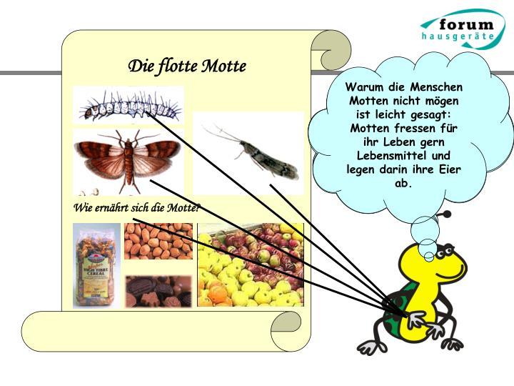 Warum die Menschen Motten nicht mögen ist leicht gesagt: Motten fressen für ihr Leben gern Lebensmittel und legen darin ihre Eier ab.
