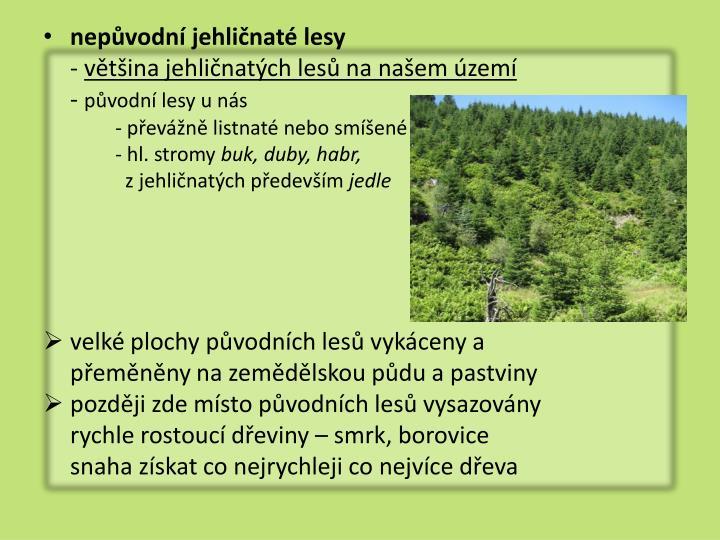 nepůvodní jehličnaté lesy