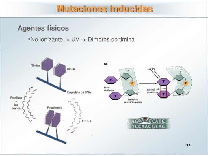 Mutaciones inducidas