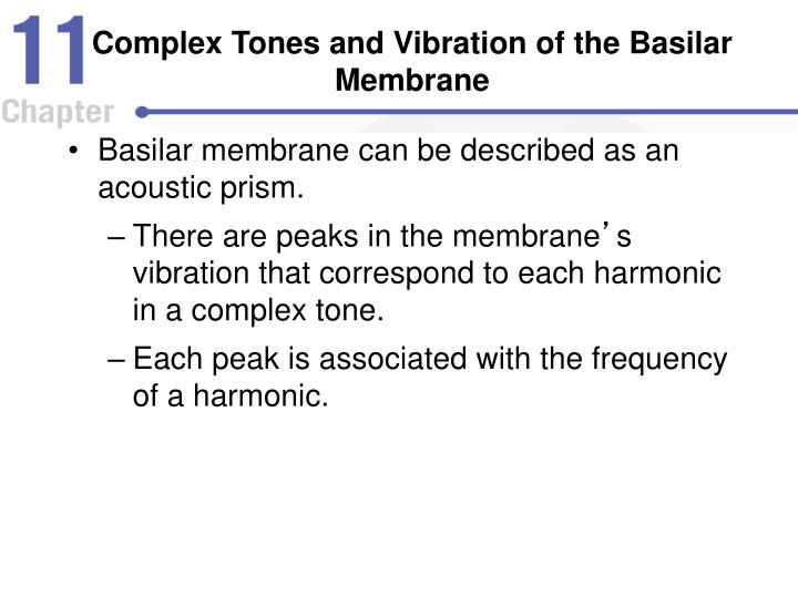 Complex Tones and Vibration of the Basilar Membrane