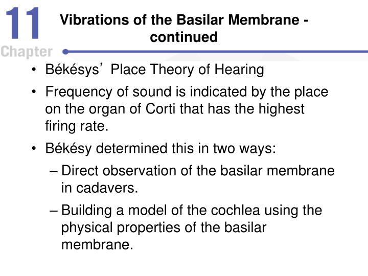 Vibrations of the Basilar Membrane - continued