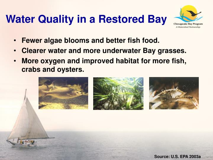 Water Quality in a Restored Bay