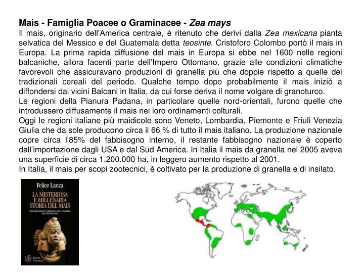Mais - Famiglia Poacee o Graminacee -