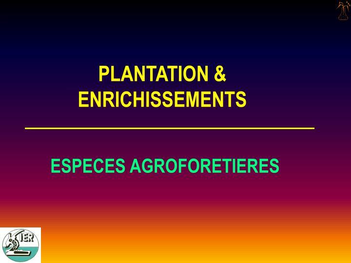 PLANTATION &