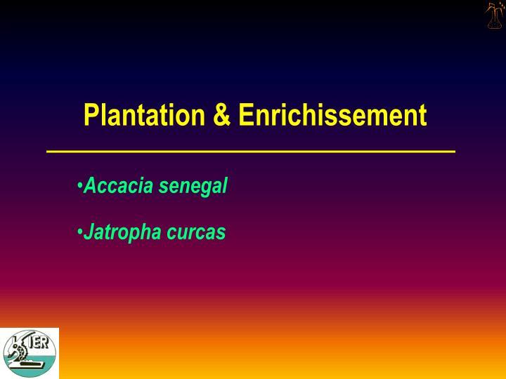 Plantation & Enrichissement