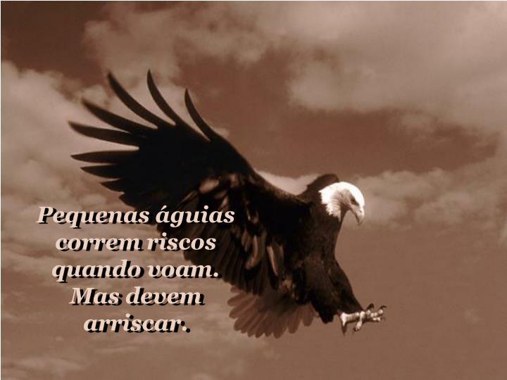 Pequenas águias correm riscos quando voam.