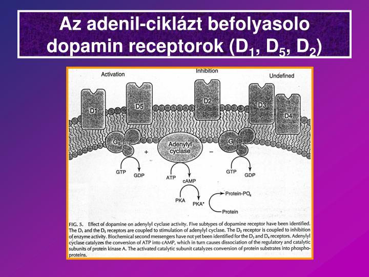 Az adenil-cikláz