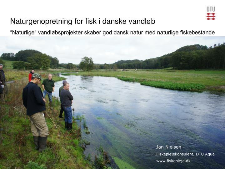 Naturgenopretning for fisk i danske vandløb