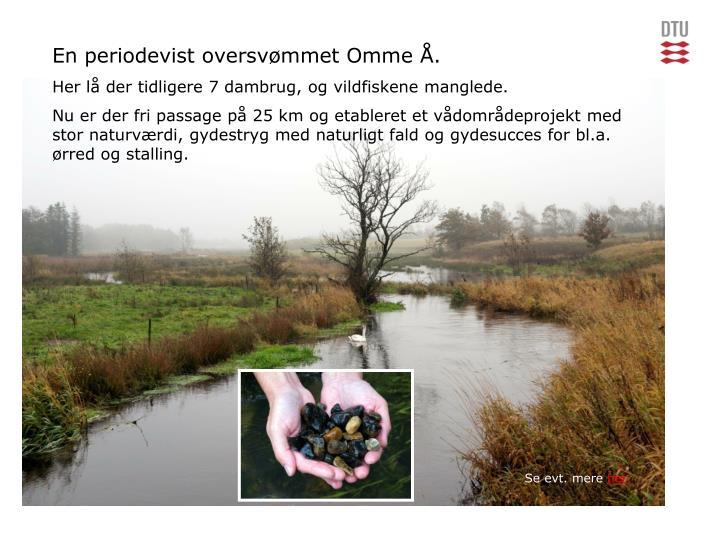 En periodevist oversvømmet Omme Å.