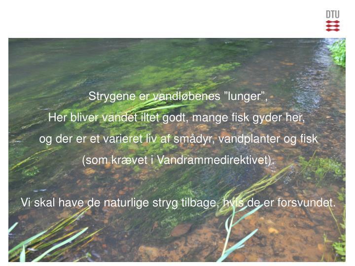 """Strygene er vandløbenes """"lunger"""","""
