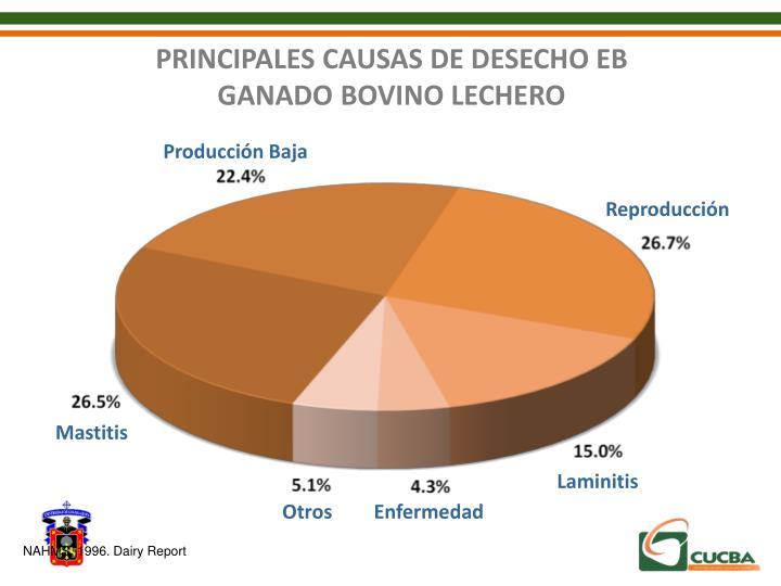 PRINCIPALES CAUSAS DE DESECHO EB