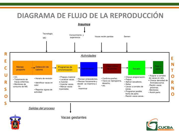 DIAGRAMA DE FLUJO DE LA REPRODUCCIÓN