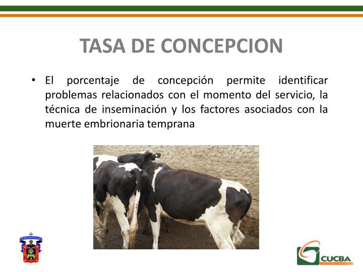 TASA DE CONCEPCION