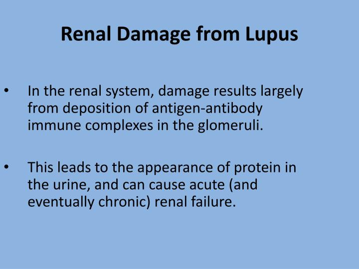 In the renal system, damage results largely from deposition of antigen-antibody immune complexes in the glomeruli.