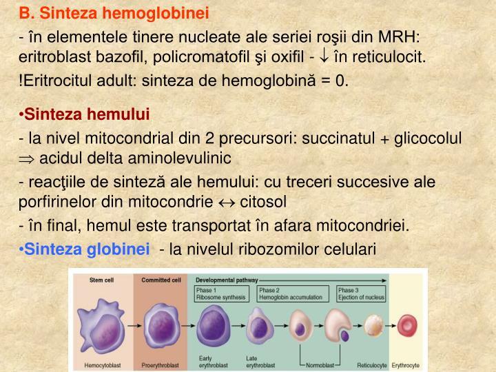 B. Sinteza hemoglobinei