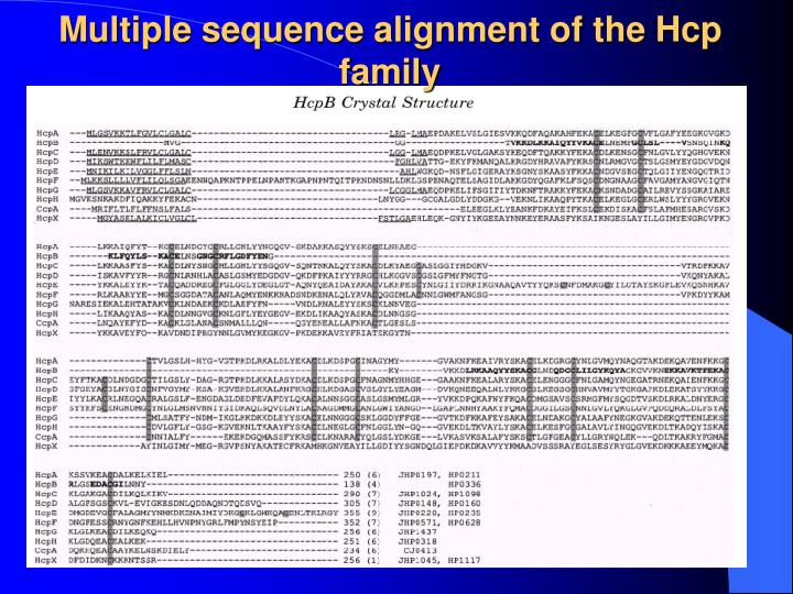 Multiple sequence alignment of the Hcp family