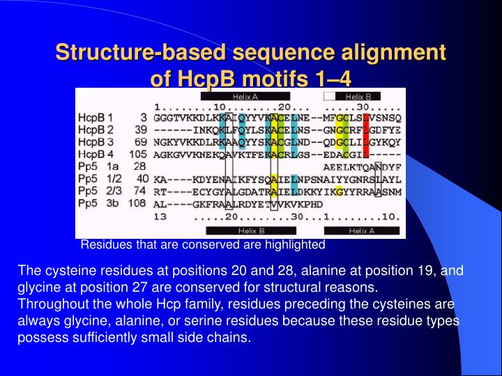 Structure-based sequence alignment of HcpB motifs 1–4