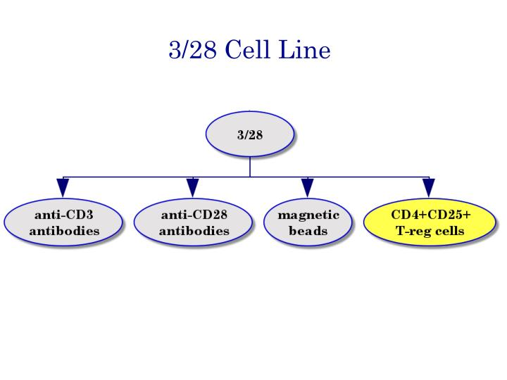 3/28 Cell Line