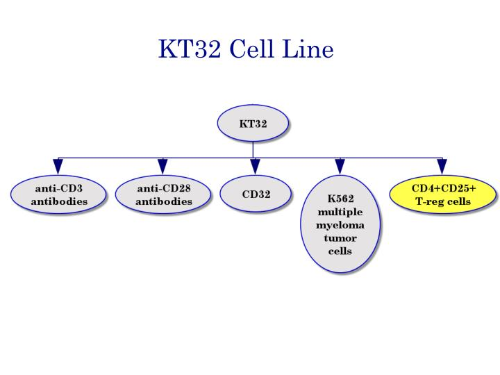 KT32 Cell Line
