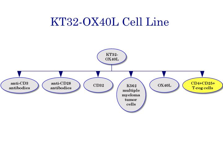 KT32-OX40L Cell Line