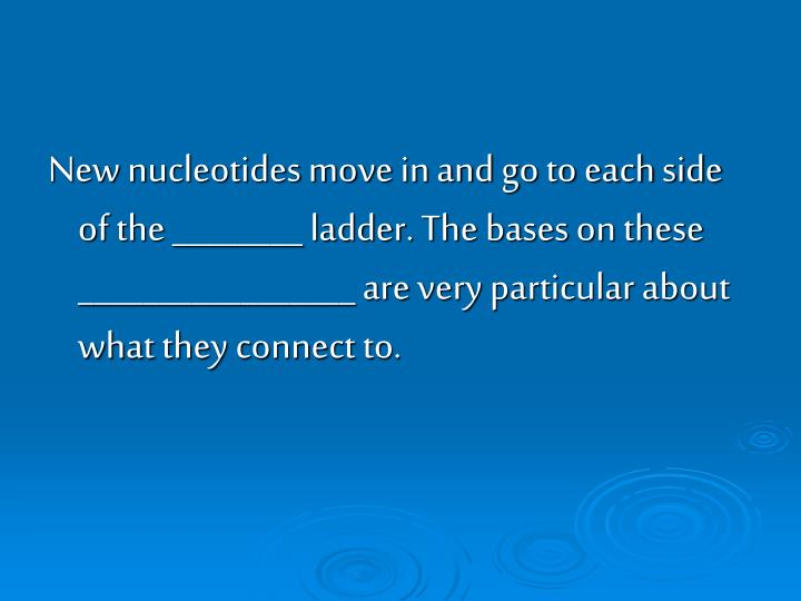 New nucleotides move in and go to each side of the ________ ladder. The bases on these _________________ are very particular about what they connect to.