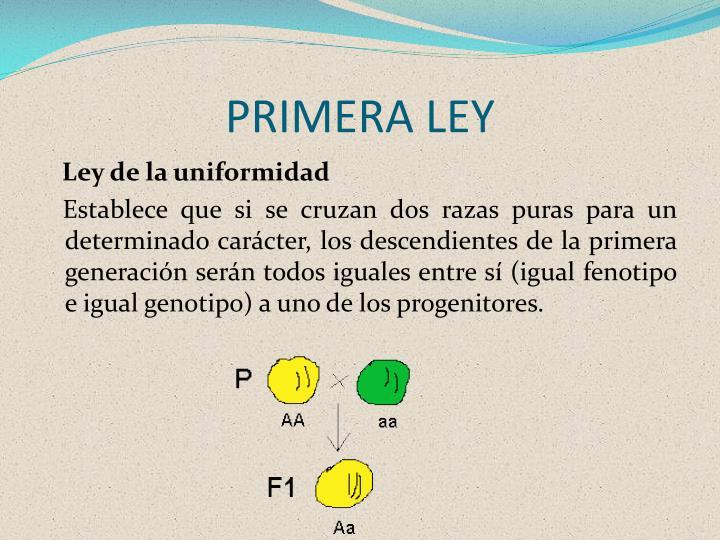 PRIMERA LEY