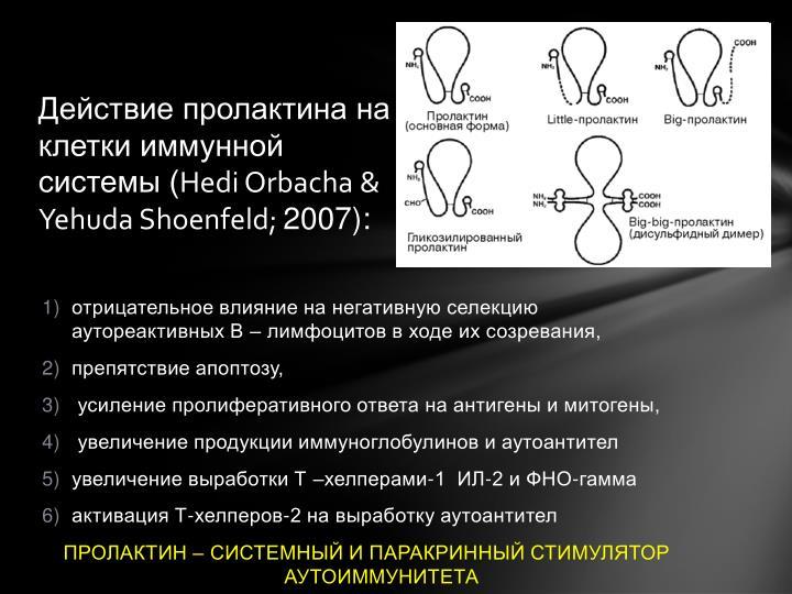 Действие пролактина на клетки иммунной системы (