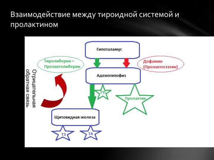 Взаимодействие между тироидной системой и пролактином