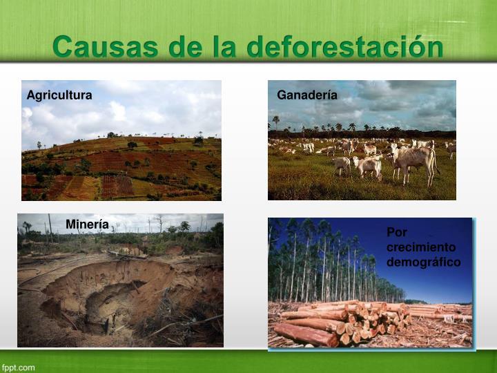 Causas de la deforestación