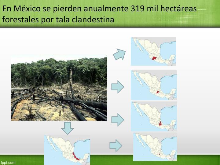 En México se pierden anualmente 319 mil hectáreas forestales por tala clandestina