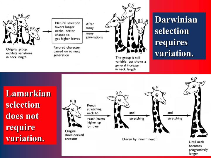 Darwinian selection requires variation.