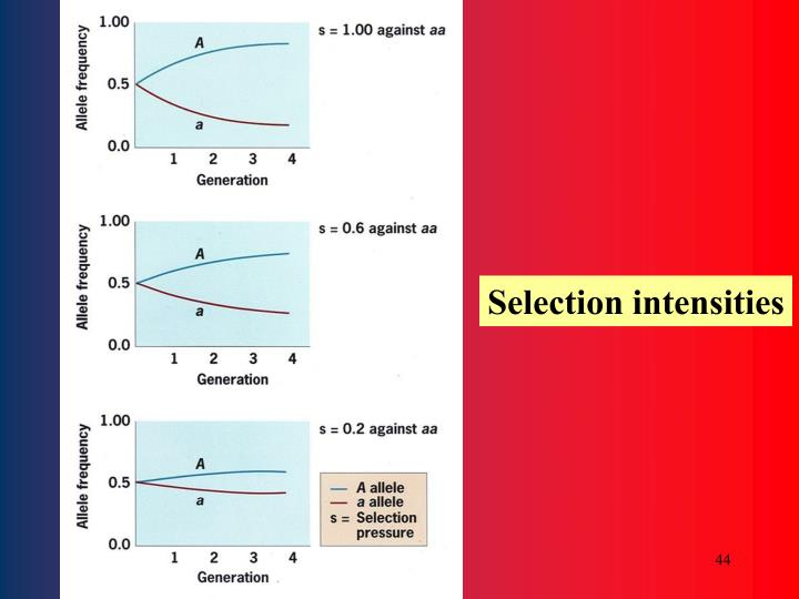 Selection intensities