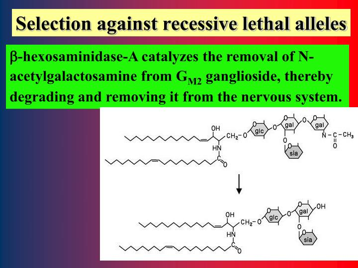 Selection against recessive lethal alleles