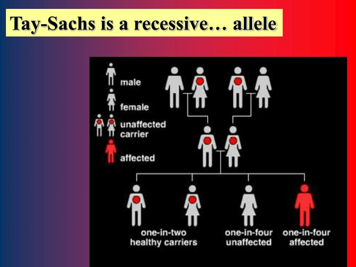 Tay-Sachs is a recessive… allele