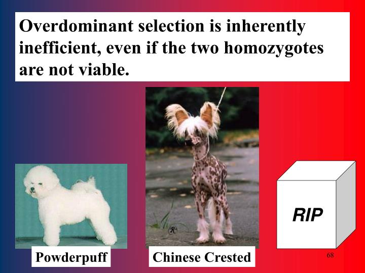 Overdominant selection is inherently inefficient, even if the two homozygotes are not viable.