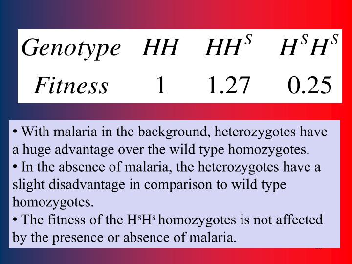 With malaria in the background, heterozygotes have a huge advantage over the wild type homozygotes.