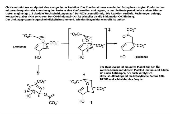 Chorismat-Mutase katalysiert eine exergonische Reaktion. Das Chorismat muss von der in Lösung bevorzugten Konformation