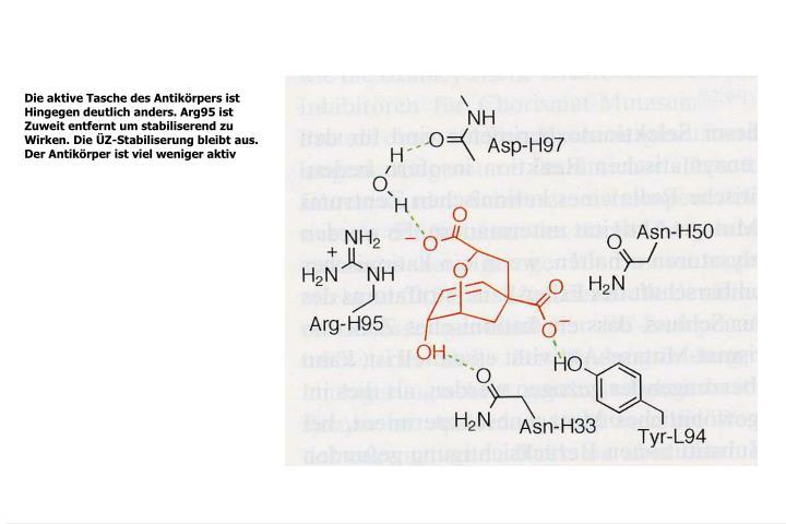 Die aktive Tasche des Antikörpers ist
