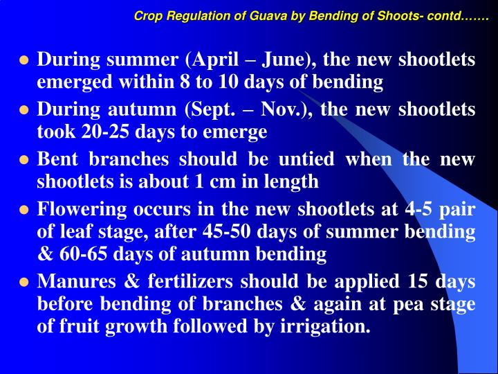 Crop regulation of guava by bending of shoots contd