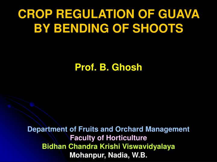 CROP REGULATION OF GUAVA