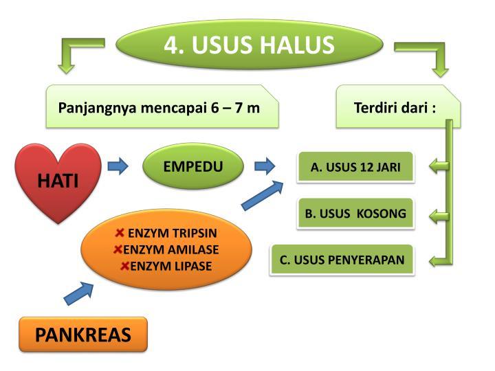 4. USUS HALUS