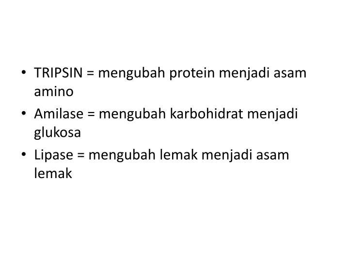 TRIPSIN = mengubah protein menjadi asam amino