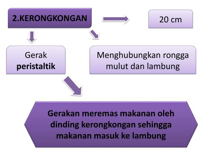 2.KERONGKONGAN