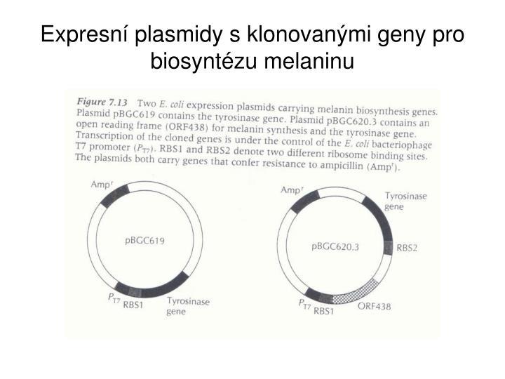 Expresní plasmidy s klonovanými geny pro biosyntézu melaninu