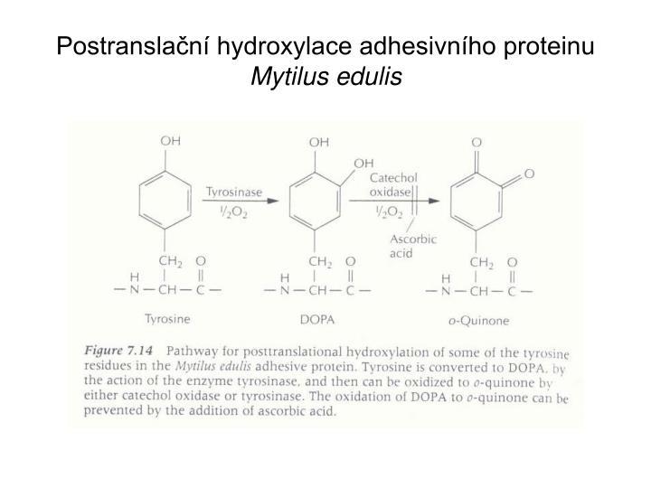 Postranslační hydroxylace adhesivního proteinu