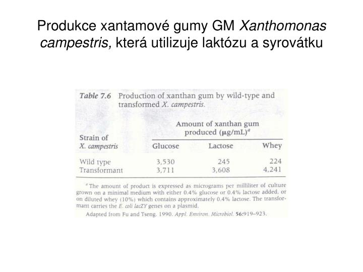 Produkce xantamové gumy GM