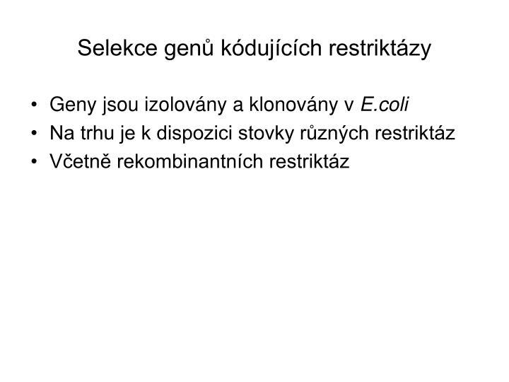 Selekce genů kódujících restriktázy